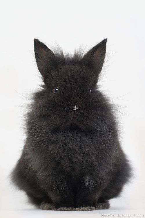 I'd love a rabbit like this. I'd call him Swift. We call