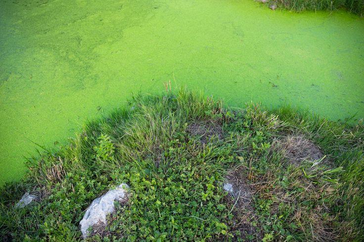 Green island by Hajnalka Farkas