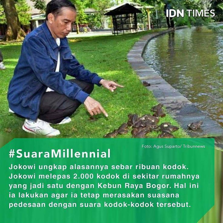 Follow @IDNTimes - The Voice of Millennials and Gen Z ----- Saat masih menjadi #Gubernur DKI Jakarta, #Presiden #JokoWidodo senang memelihara kodok. ----- Kodok-kodok itu ia pelihara di dalam kolam #ikan rumah dinas gubernur DKI di depan Taman Surapati, #Menteng, Jakarta Pusat. ----- Jumlah kodoknya pun tak sedikit. #Kodok tersebut berwarna hijau tua dan berukuran besar. ----- Menurut #Jokowi, suara-suara kodok tersebut membuatnya merasa suasana desa yang tenang. Apalagi, kala hujan…