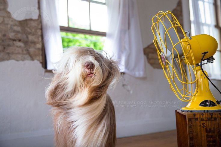 Giving dogs this gift is Ontario-based photographer Illona Haus, of Scruffy Dog Photography. Her photo series, BLOW, captures dogs posing in front of fans to document them in all their glory, fur flowing in the wind and spirits strong.  Behold their greatness.