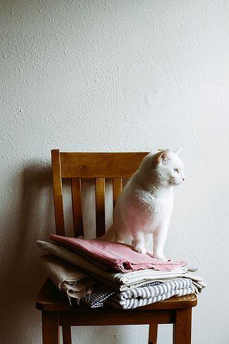 V. Cat \\\\ james fitzgerald III
