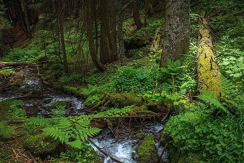 Фотограф Евгений Карпенко (Eugene Karpenko) - Хвойный лес в Тебердинском заповеднике. #806854. 35PHOTO