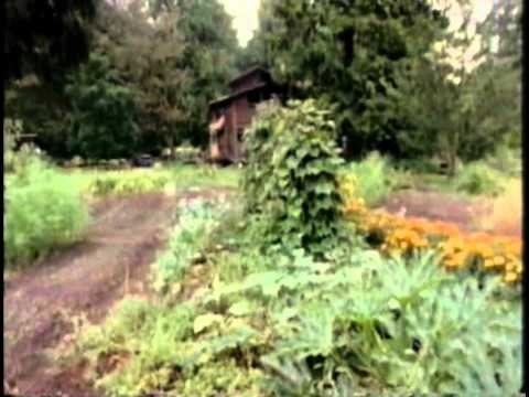 permaculture one bill mollison pdf