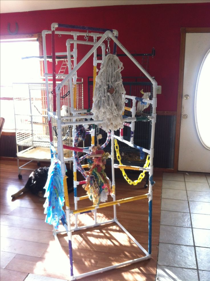 Elaborate pvc parrot playstand