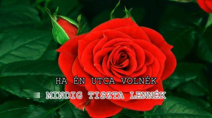 Bródy János - ha én rózsa volnék - KARAOKE 720p