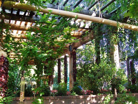 Patio Dining Under A Chile And Vine Covered Pergola