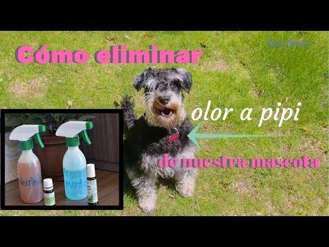 Ambientador casero para controlar el olor a mascota - YouTube