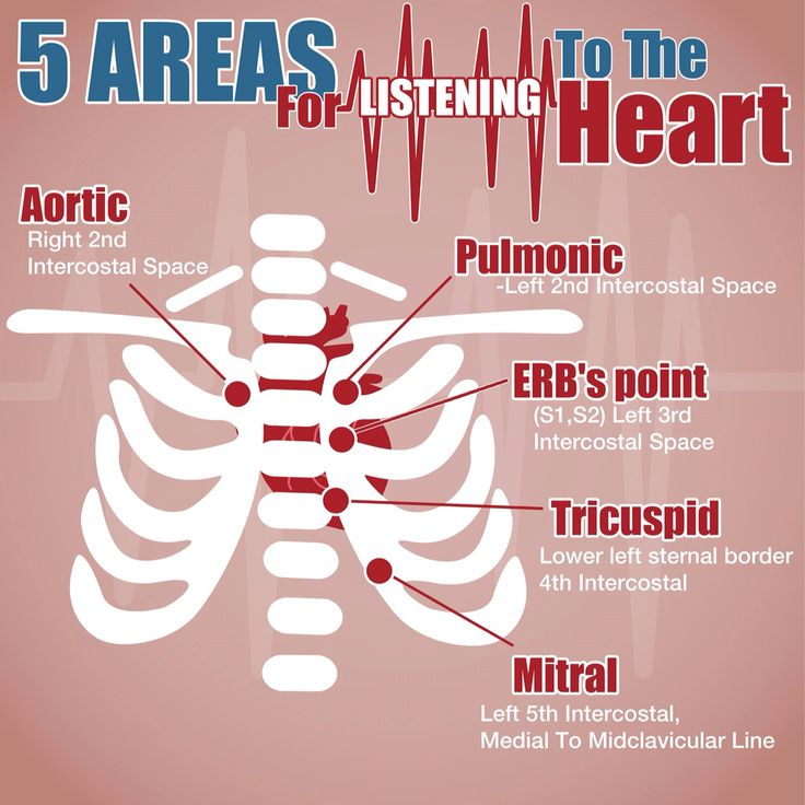 listening to the heart throughout the Listening to heart sounds is an art that takes practice to perfect assessing heart sounds sallie beattie dulak, rn, msn the author represents diastole, or ventricular relaxation during diastole the ventricles fill with blood coming from the atria.