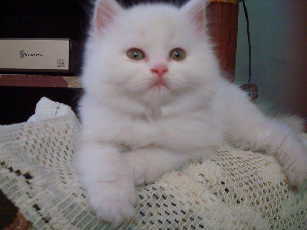 صور قطط باقة مختارة من أروع و أجمل القطط مع خلفيات Hd Cats Animals