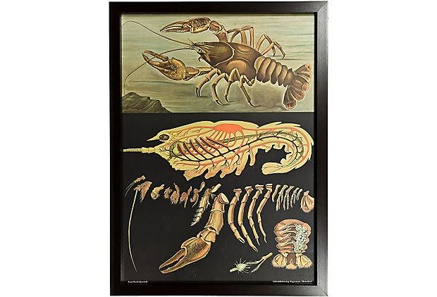 Vintage Freshwater Crayfish