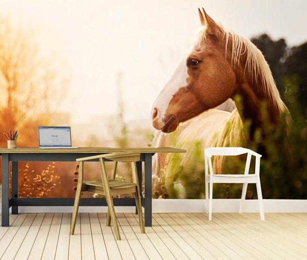Vlies fotobehang Paard in het veld - Dieren behang | Muurmode.nl