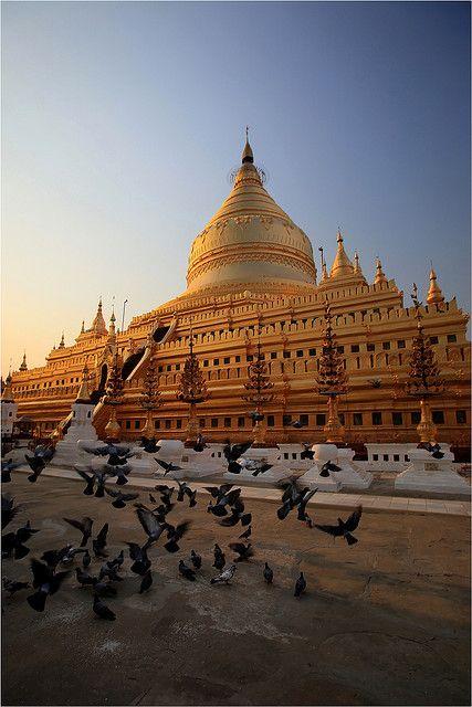 Birmanie: envol de pigeons sur Shwezigon