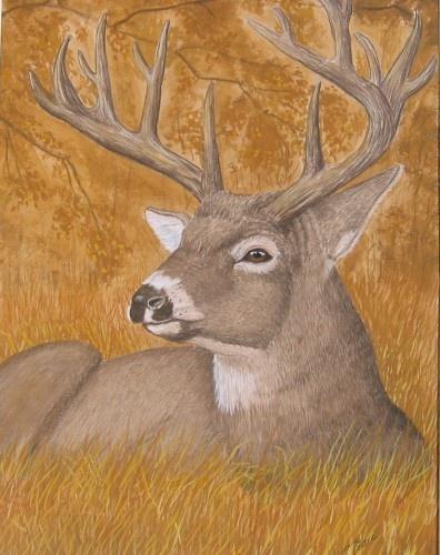 White Tailed Deer Wetcanvas In 2019 Deer Animal