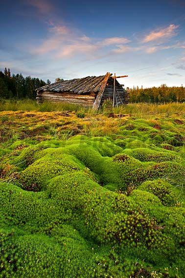 Ängslada på mosstäckt myr Norrbotten