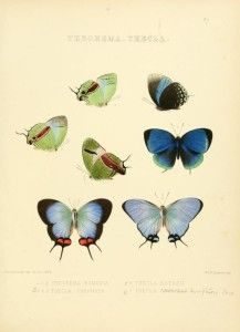 Vintage Butterfly Illustrations from grafficalmuse.com