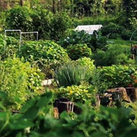 Build Better Garden Soil With Free Organic Fertilizers   Organic Gardening   MOTHER EARTH NEWS