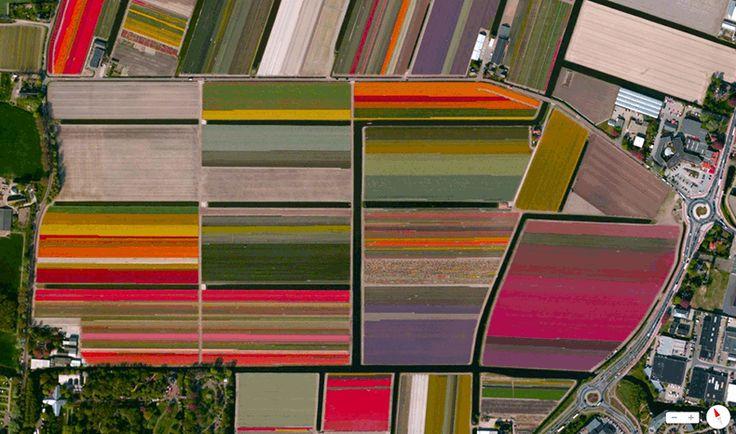 Foto mozzafiato: Olanda: Lisse - Campi di Tulipani