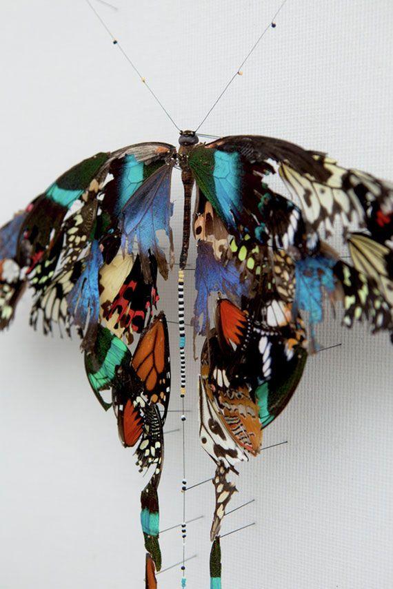 新たな形に・・・傷んだ蝶の翅を修復して作られた標本シリーズ「Broken butterflies」