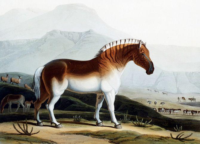 Aug. 12, 1883: Quagga's Extinction a Nasty Surprise ...