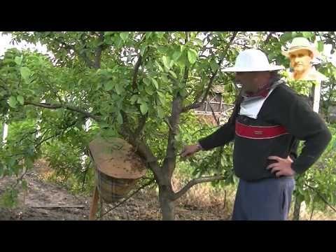 ▶ Un alt mod de formare a nucleelor si roi în pom - YouTube