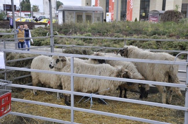 """Evenimentul are loc în parcarea """"Iulius Mall"""" Suceava. De asemenea, sînt prezenţi meşteri populari şi este organizat un tîrg de animale. Pe parcursul tîrgului sînt programate spectacole folclorice în care vor evolua grupuri din judeţ şi Ansamblul Artistic """"Ciprian Porumbescu""""."""