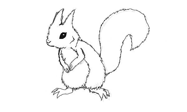 Squirrel Template