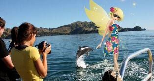 My time in Northland, New Zealand.  Dolphins in the Bay of Islands!  #NewZealand #Northland #BayOfIslands #AirNZ #AirNZFairy #NZ #adventures (Credit ExploreNZ)