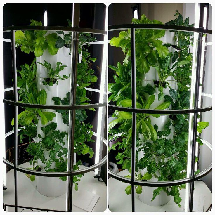 45 Best Tower Garden Vertical Aeroponic Growing System