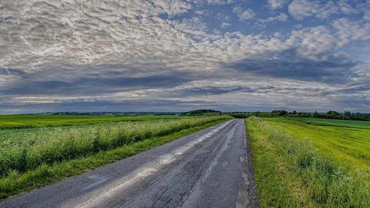 Road between Fields