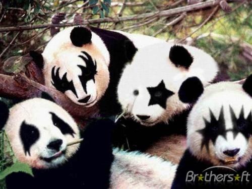 Panda Kiss:  Pandas Bears, Kiss Pandas,  Ailuropoda Melanoleuca, Pandabear, Rocks And Rolls,  Coon Bears, Giant Pandas, Animal, Kisses