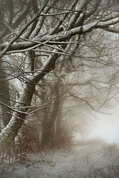 Entendre la neige craquer sous ses pieds sur les chemins eneigés...