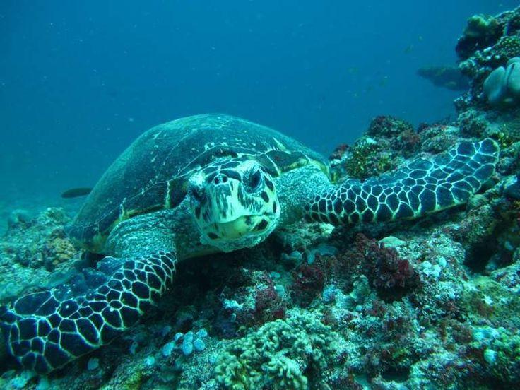 deluxea | Potápění Maledivy – rajce.net