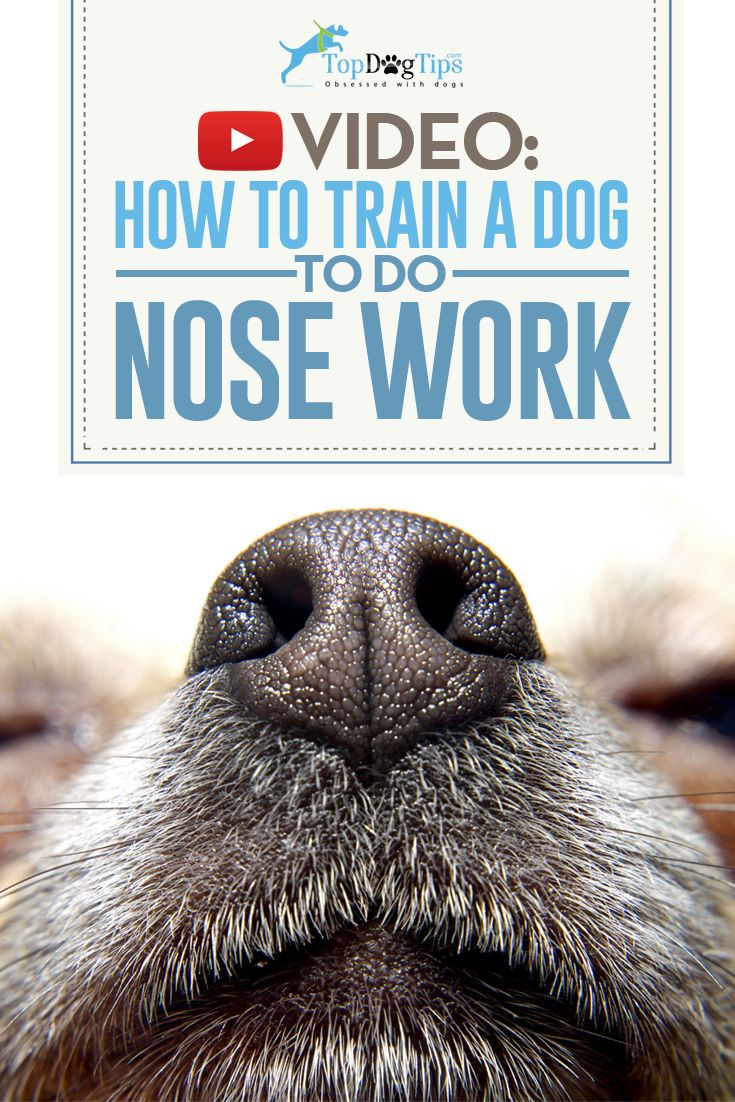 How To Train A Dog To Do Nose Work and Why You Should: Video Guide. We see beautiful colors in thousands of different hues. Your dog takes in information from his environment through his nose, and exercising that organ by learning how to train a dog to do