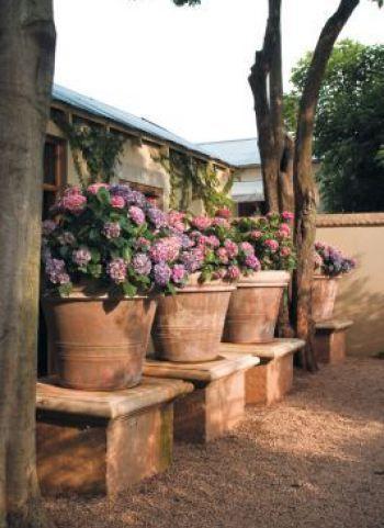 52 best yard garden videos images on pinterest backyard ideas clay potted hydrangeas via pinterest workwithnaturefo