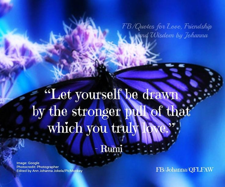 Friendship Quotes Love Pinterest: 17 Best Images About Butterfly Wisdom On Pinterest