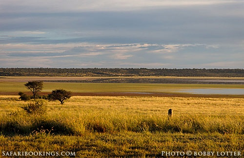 Sunrise over Mabuasehube Pan (Botswana side) @ Kgalagadi Transfrontier Park in #SouthAfrica. See our #Kgalagadi travel guide: http://www.safaribookings.com/kgalagadi