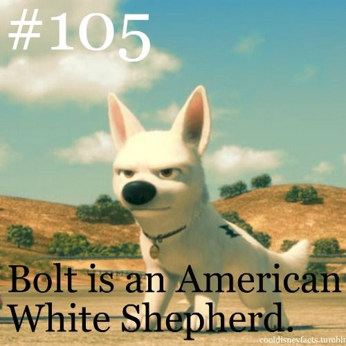 After watching the movie, I was like sooo obsessed abput finding out what breed bolt was. I finally came to this conclusion and have been wantung this breed ever since.