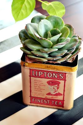 Succulents in old tin cans?  A Doorable!
