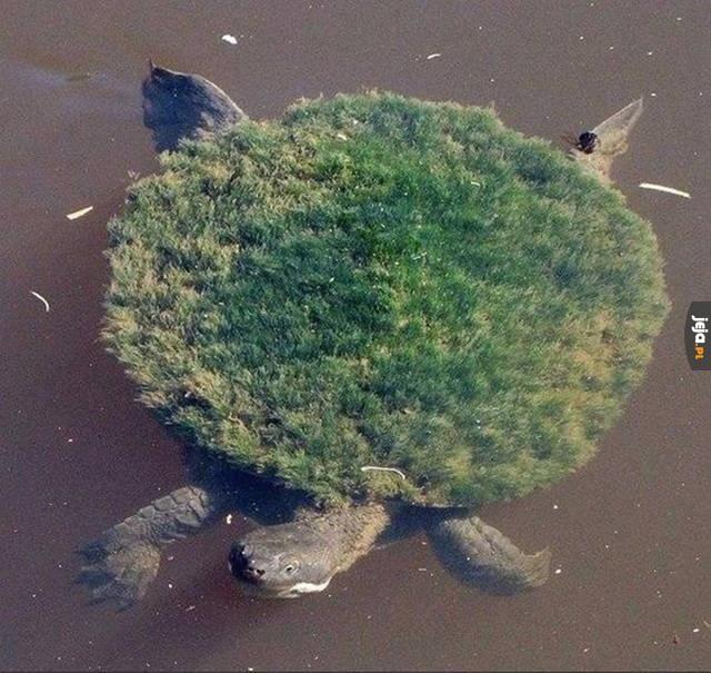 Privat turtle island