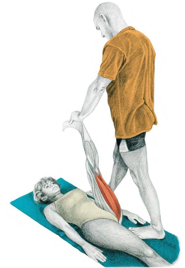 42. Flexion of the Knees with Assistance in Decubitus Prone Position