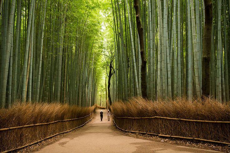 S'il y avait un concours pour la huitième merveille du monde, le Japon serait sans aucun doute l'un des prétendants les plus sérieux. C'est en raiso