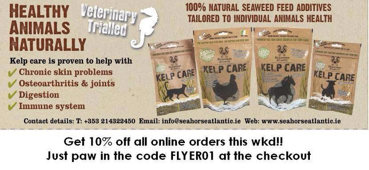Bank Holiday Kelp Care offer for your #cat #dog #horse and #chicken