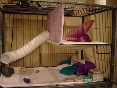 Cage Setup Examples - Hedgehog Central – Hedgehog pet care & owner forum