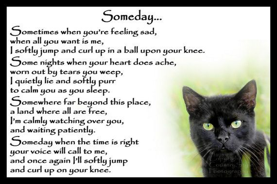 Beautiful Black Cat Memorial Pet Loss Bereavement by Chaffys                                                                                                                                                                                 More