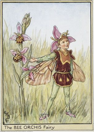 Illustration for the Bee Orchis Fairy from Flower Fairies of the Wayside. A boy fairy stands in a field pointing to a bee orchis.    Author / Illustrator  Cicely Mary Barker