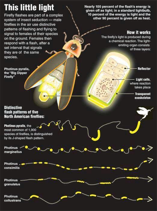 Lightin bugs