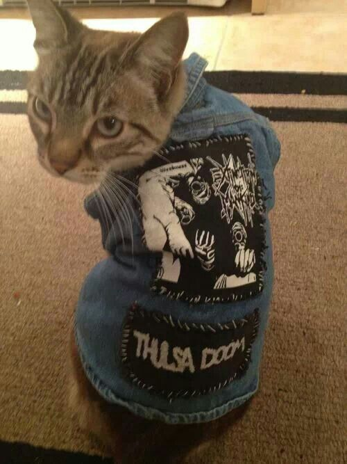 Crust punk kitteh