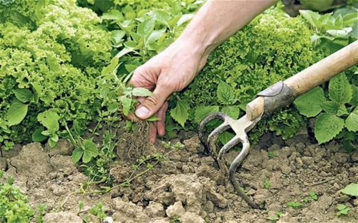 Though it's tempting to use herbicides, there are important health reasons to avoid them. Here are 10 organic weed control methods for your garden.