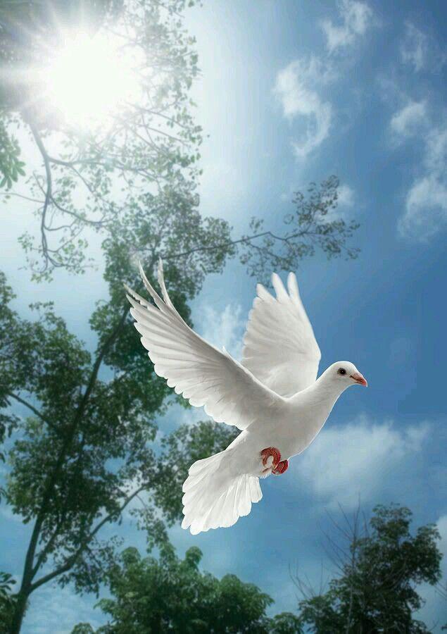 Белые птицы открытки, именины виталия