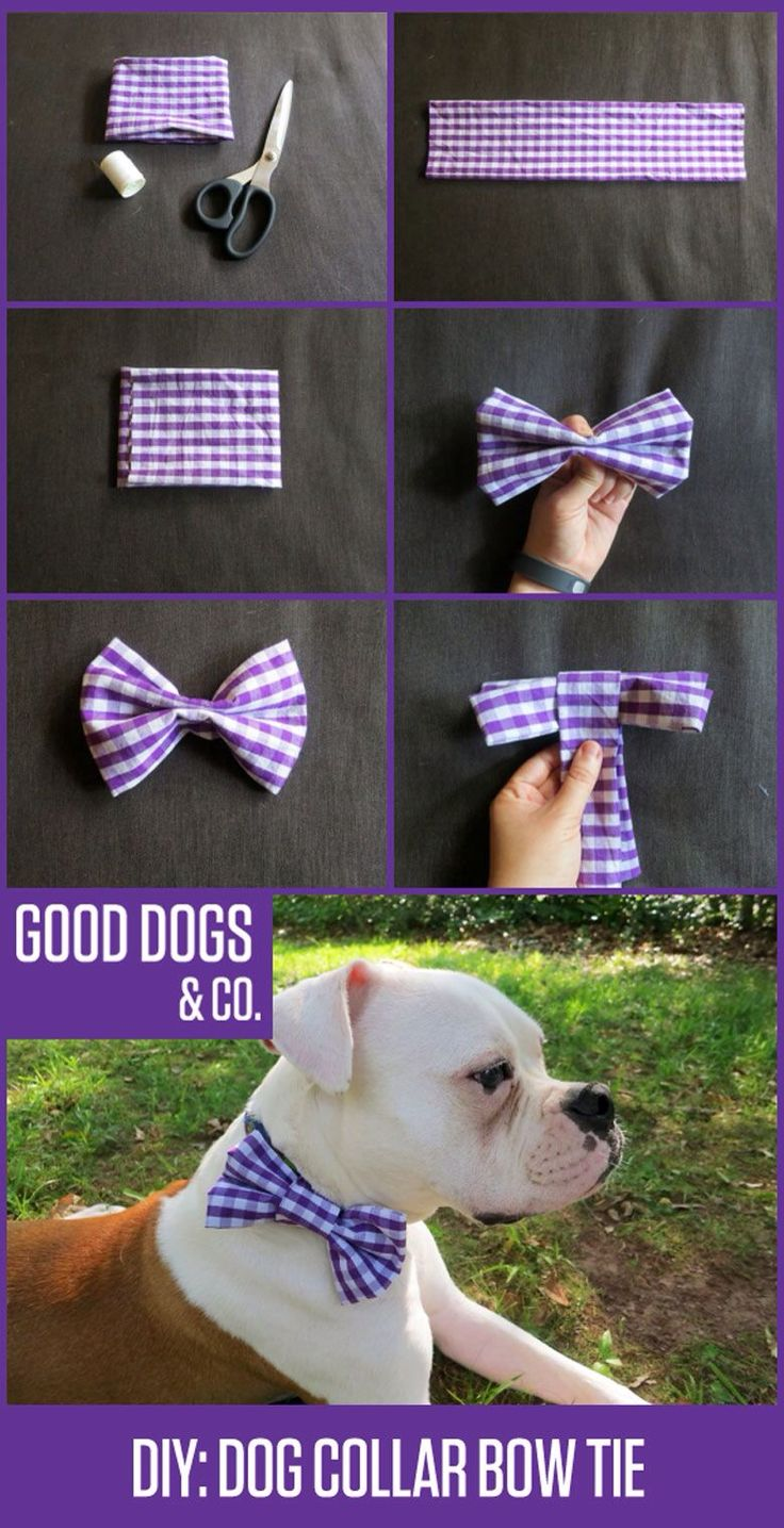 bowties for adoptions